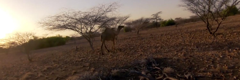 Travelli Africa 2